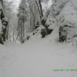 Winter im Siebengebirge